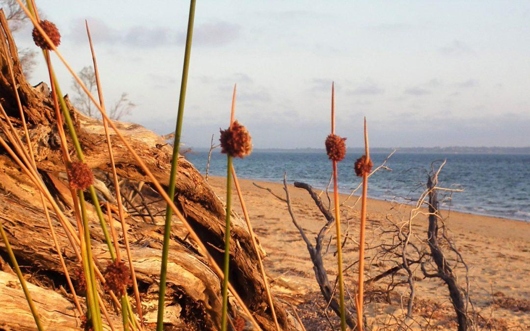 Australian Poetry & Kalang Retreat present The Kalang Award––Tracking Nature